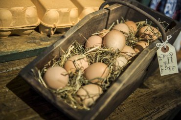 giddy grocer fresh eggs - Daniel Cobb - Locally grown